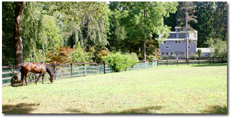 Call Anne Savino, Licensed Real Estate Agent - Your North Salem Equestrian Property Expert - Find a home for your horses